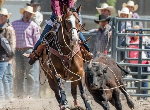 Willowbrook cowgirl taking rodeos by reins