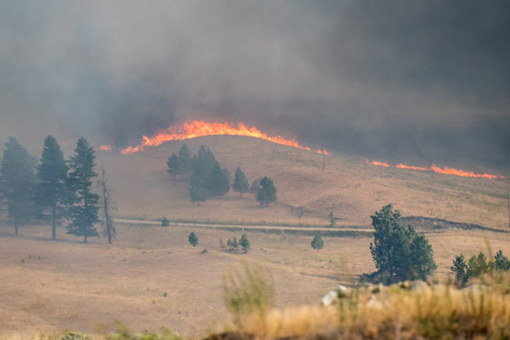 A wall of fire advances towards Canada from Washington State, driving by strong south winds, near Anarchist Mountain.