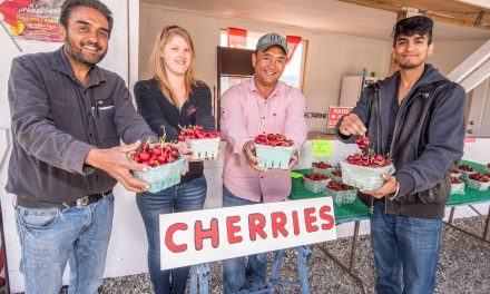 First Osoyoos cherries of the year on sale Friday