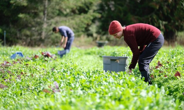Province launches online portal for agriculture industry jobs
