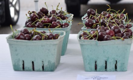 B.C. farms producing less fruit due to COVID-19, growers say