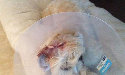 Owner leaves scene after pit bull attacks couple's dog