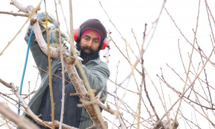 'Back to square one' for fruit growers and foreign workers