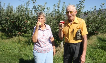 Oliver area Apple crops look very promising: BCFGA