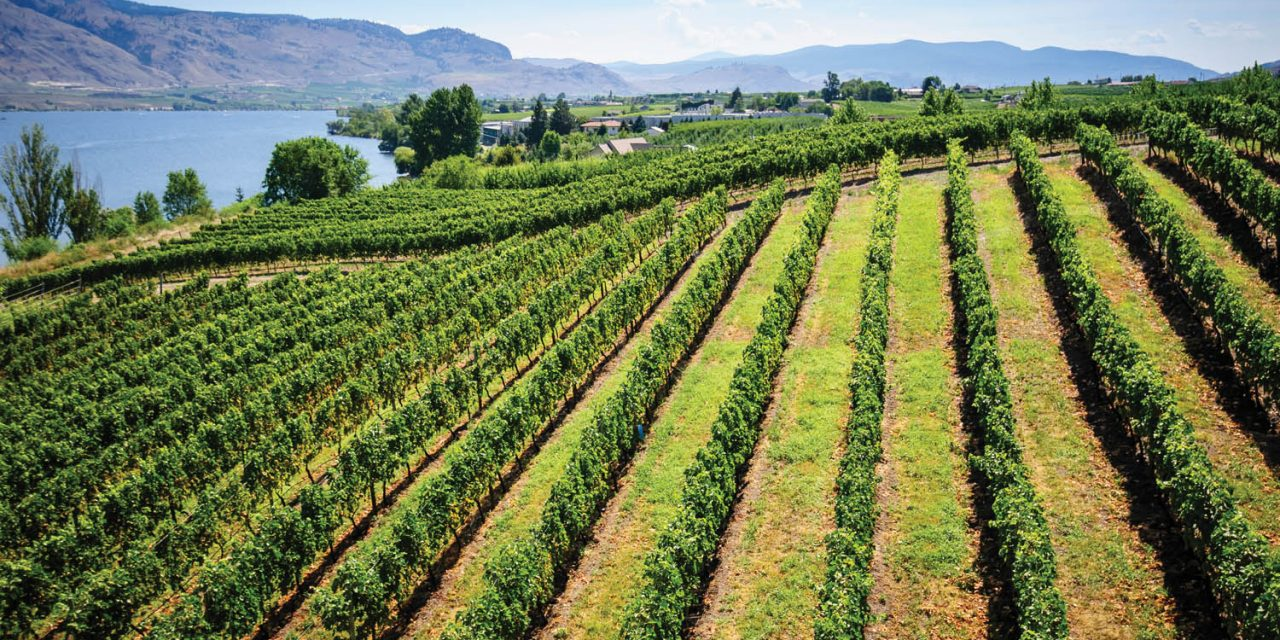 South Okanagan wineries go virtual with socially distant tastings